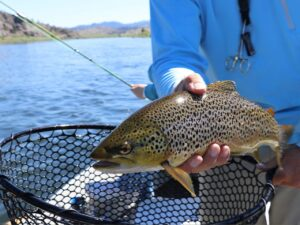 best trout fishing rod