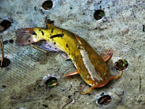 best catfish reels